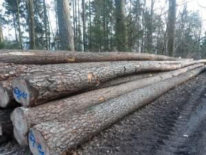 Holzbringung - Langholzbringung-web
